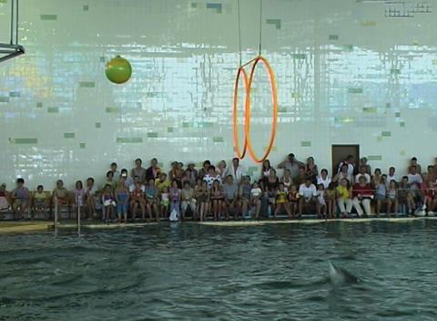 dolphin jump hoop Footage