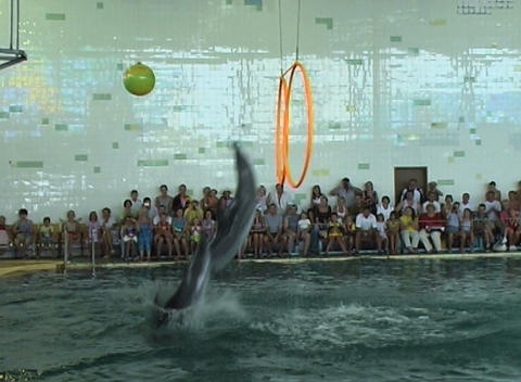 dolphin jump hoop Stock Video Footage