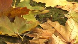 autumn 13 Stock Video Footage