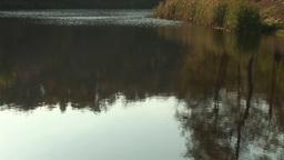 pond 7 Stock Video Footage