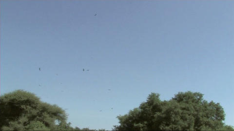 Vultures flying Stock Video Footage
