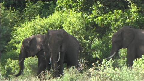Elephants relaxing Stock Video Footage