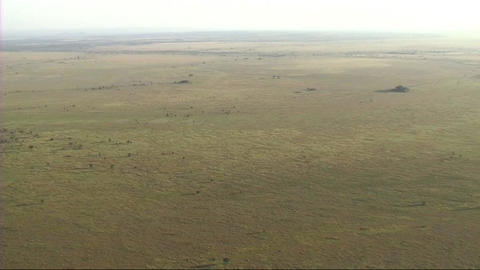 Aerial view of the Serengeti Footage