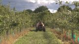 Spraying Pesticides Onto Apple Trees stock footage