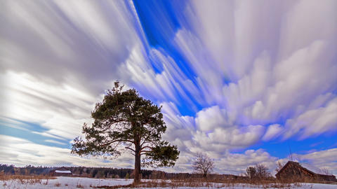 A tree grows in the field. Blurry. Time Lapse. 128 Footage