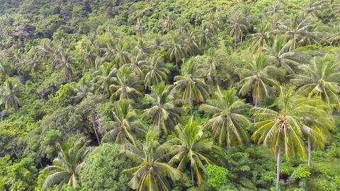Aerial shot of the jungle Flying over the Ko Racha Footage