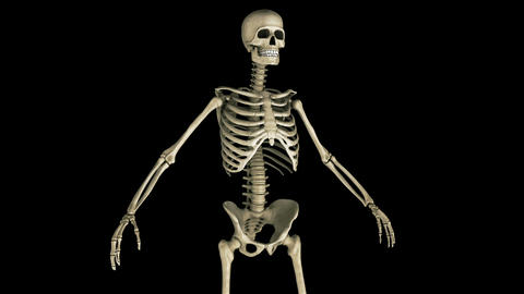 Human Skeleton stock footage