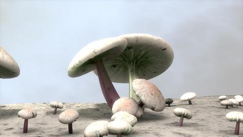 Mushroom Animation stock footage