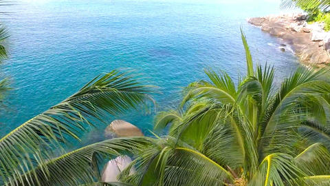Jungle. Sea. Aerial shot. Close up of palm frond Footage