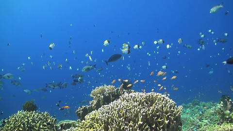 Coral Reef With Healthy Hard Corals stock footage