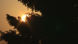 Sunset Sun Beneath A Big Tree stock footage