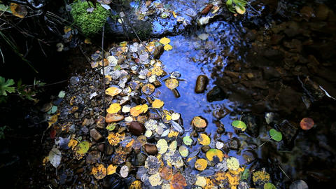 Colorful Leaves in Water Footage