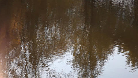 Autumn Trees Are Reflected In Water stock footage