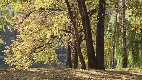 Beautiful park in sunny autumn day Footage