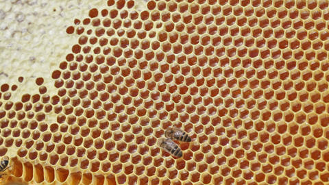 Frame with bee honeycombs filled with honey, and b Footage