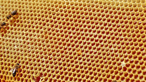 Frame with bee honeycombs filled with honey and be Footage