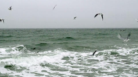 Seagulls Flying Over The Sea stock footage