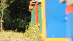 The entrance to a honey bee box Footage