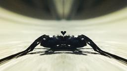 Bizarre scorpion approaching Footage