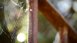 Spider Web stock footage