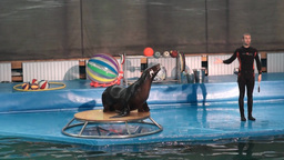 Spectacle In The Dolphinarium With A Fur-seal stock footage