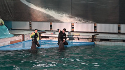 Show in the dolphinarium with a singing dolphins Footage