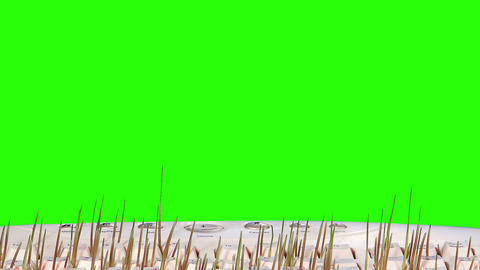 Grass grows from a computer keyboard green screen. Footage
