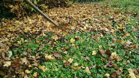 4 K Raking Autumn Leaves 2 Footage