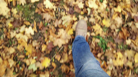 4 K Walking in Autumn Forest Perspective High Angl ภาพวิดีโอ