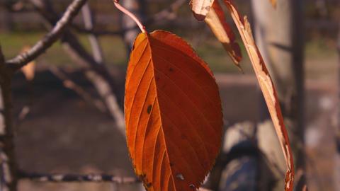 2160p (12bit RGB4:4:4) 秋 autumn Japan Footage