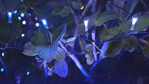 2160p (12bit RGB4:4:4) Illumination イルミネ Footage