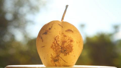 round pear revolve Footage