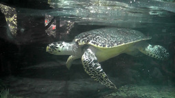 turtle aquarium Stock Video Footage