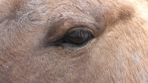 eye horse Stock Video Footage