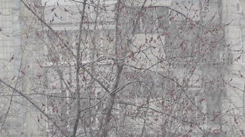 snow spring Stock Video Footage