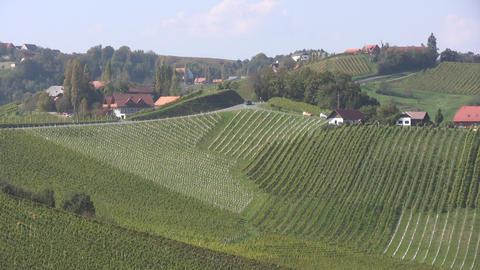 Vineyards Stock Video Footage