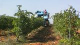 Grape Harvest stock footage
