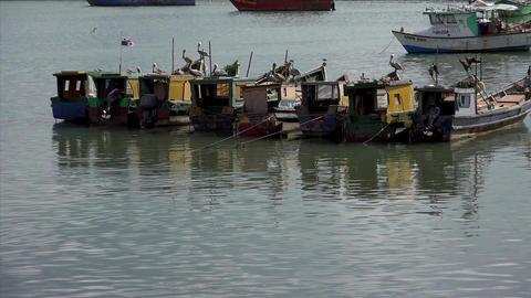 Panama City, view of seagulls and cormorants on fi Footage