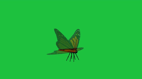 Butterfly Fluttering: Green Screen+ Looping CG動画