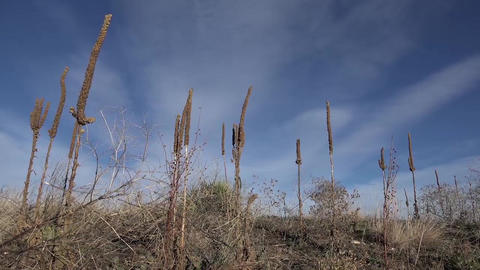 Tall Western Weeds In Windy Sun Footage