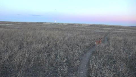Pan Of Dog Moon In Background stock footage