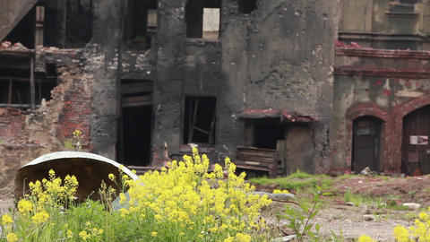 Yellow Flowers In A Ghost Town stock footage