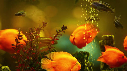 Bright Tropical Fishes stock footage