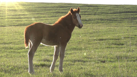 Foal in the Sun Footage