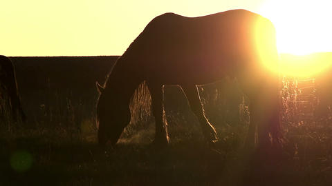 Pasture at Sunset Footage