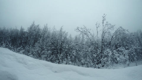 Winter Forest 1 ビデオ