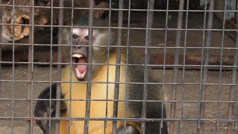 Monkey Footage