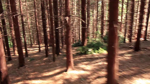 Cross-country run Footage