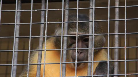 Monkey Stock Video Footage