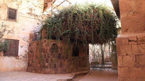 The burning bush. Saint Catherine's Monastery. Sinai. Egypt Footage